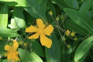 境内の花①