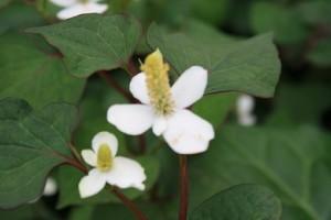境内の花④
