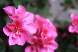 境内の花③
