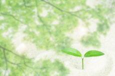 新芽の画像